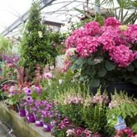 Brigg Garden Centre & Lincoln