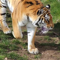 S - Yorkshire Wildlife Park